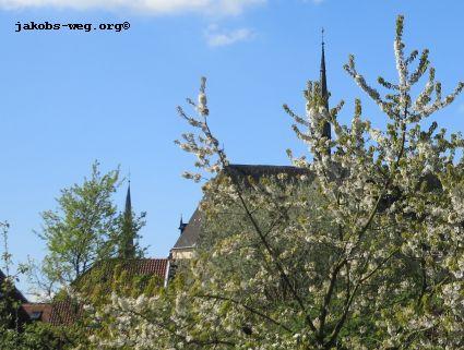 Kirschblüte am Jakobsweg in Niedersachsen
